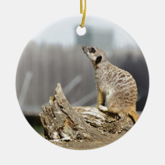 Meerkat Sniff Round Ceramic Decoration