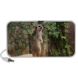 Meerkat Travelling Speaker