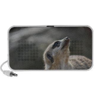 Meerkat Laptop Speakers