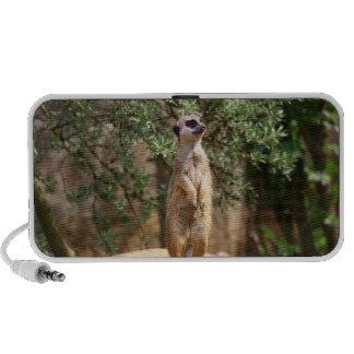 Meerkat Travelling Speakers