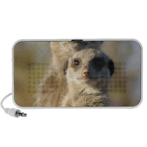 Meerkat Speakers
