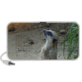 Meerkat Speaker