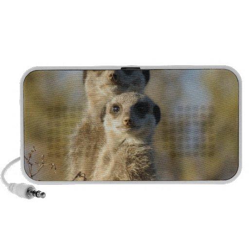 Meerkat Mini Speakers
