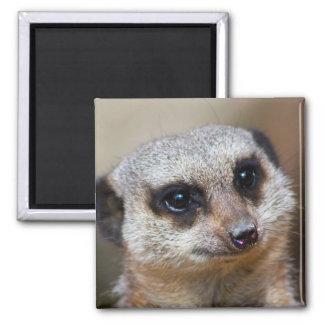 Meerkat Square Magnet