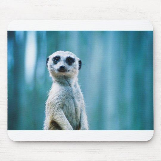 Meerkat Staredown Mouse Pad