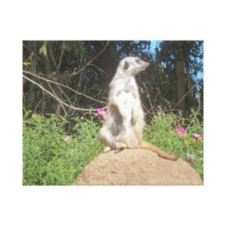 Meerkat Stretched Canvas Prints
