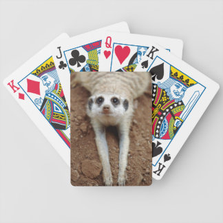 Meerkat (Suricata Suricatta) Cooling Down Bicycle Playing Cards