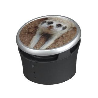 Meerkat (Suricata Suricatta) Cooling Down Speaker