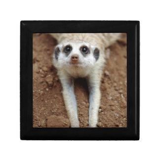 Meerkat (Suricata Suricatta) Cooling Down Gift Box