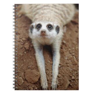 Meerkat (Suricata Suricatta) Cooling Down Notebooks