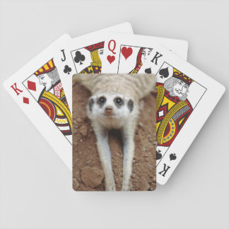 Meerkat (Suricata Suricatta) Cooling Down Playing Cards