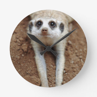 Meerkat (Suricata Suricatta) Cooling Down Round Clock