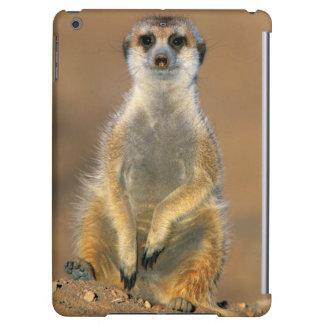 Meerkat (Suricata Suricatta) Sentinel At Den