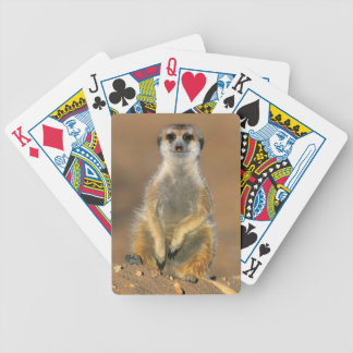 Meerkat (Suricata Suricatta) Sentinel At Den Bicycle Playing Cards