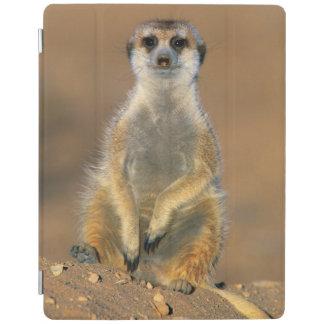 Meerkat (Suricata Suricatta) Sentinel At Den iPad Cover