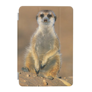 Meerkat (Suricata Suricatta) Sentinel At Den iPad Mini Cover