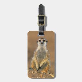 Meerkat (Suricata Suricatta) Sentinel At Den Luggage Tag