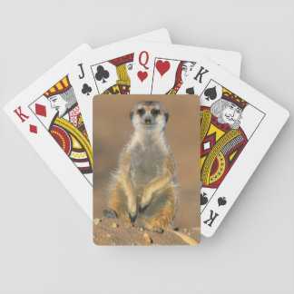Meerkat (Suricata Suricatta) Sentinel At Den Playing Cards