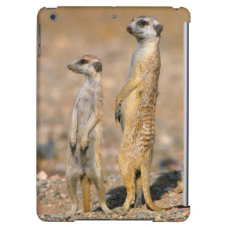 Meerkat (Suricata Suricatta) Sentinels, Karas