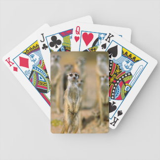 Meerkat (Suricata Suricatta) Sentinels, Karas 2 Bicycle Playing Cards