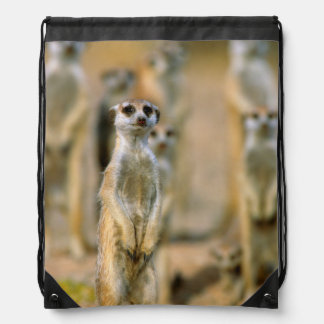 Meerkat (Suricata Suricatta) Sentinels, Karas 2 Drawstring Bag