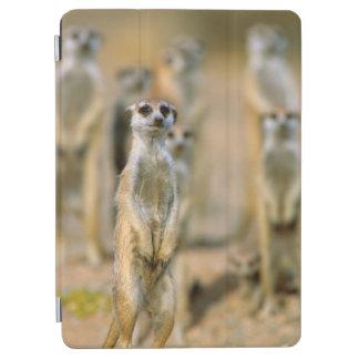 Meerkat (Suricata Suricatta) Sentinels, Karas 2 iPad Air Cover