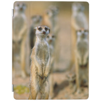 Meerkat (Suricata Suricatta) Sentinels, Karas 2 iPad Cover