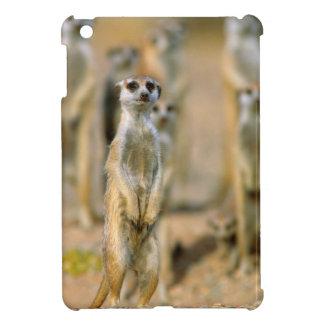 Meerkat (Suricata Suricatta) Sentinels, Karas 2 iPad Mini Cases