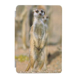 Meerkat (Suricata Suricatta) Sentinels, Karas 2 iPad Mini Cover