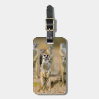 Meerkat (Suricata Suricatta) Sentinels, Karas 2 Luggage Tag