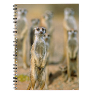 Meerkat (Suricata Suricatta) Sentinels, Karas 2 Notebooks