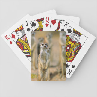 Meerkat (Suricata Suricatta) Sentinels, Karas 2 Playing Cards