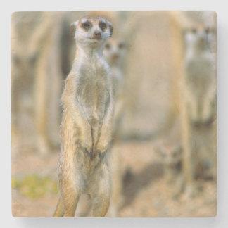 Meerkat (Suricata Suricatta) Sentinels, Karas 2 Stone Coaster