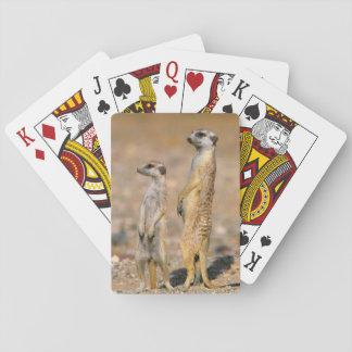 Meerkat (Suricata Suricatta) Sentinels, Karas Deck Of Cards