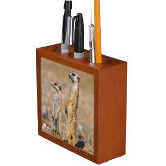 Meerkat (Suricata Suricatta) Sentinels, Karas Desk Organiser