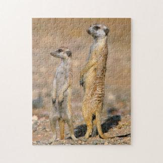 Meerkat (Suricata Suricatta) Sentinels, Karas Jigsaw Puzzle