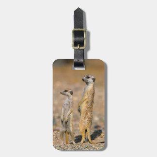 Meerkat (Suricata Suricatta) Sentinels, Karas Luggage Tag