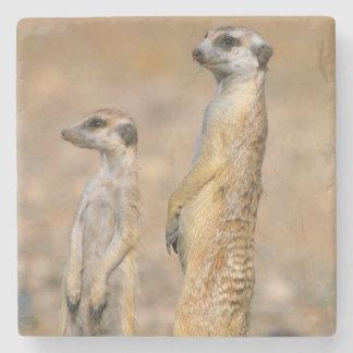 Meerkat (Suricata Suricatta) Sentinels, Karas Stone Coaster