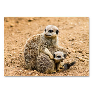 Meerkat Table Card