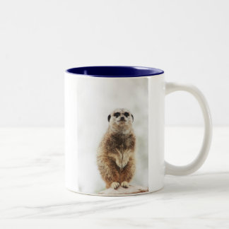 meerkat Two-Tone coffee mug