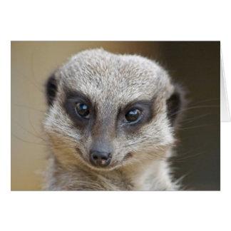 Meerkat Up Close Card