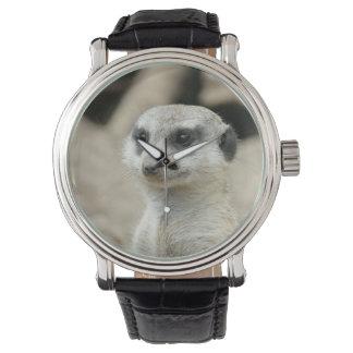 Meerkat Watch