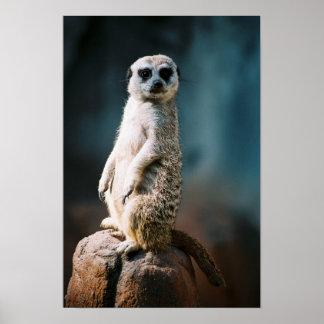 Meerkat Watch - Poster
