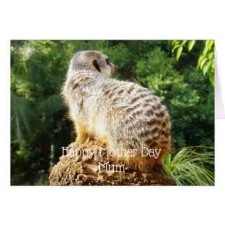 Meerkat With A High View, Mothers Day Card