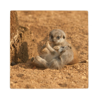 Meerkat Wood Coaster