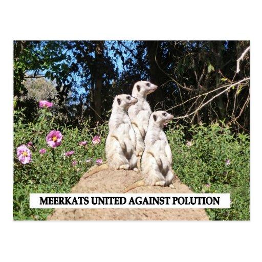 Meerkats Against Polution Postcard