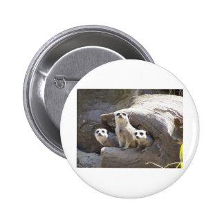 Meerkats Pin