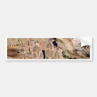 Meerkats Bumper Sticker
