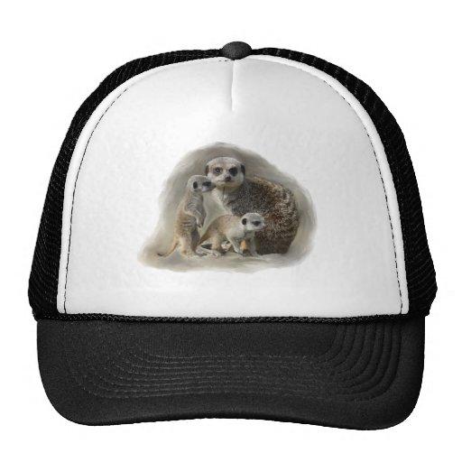 meerkats cap