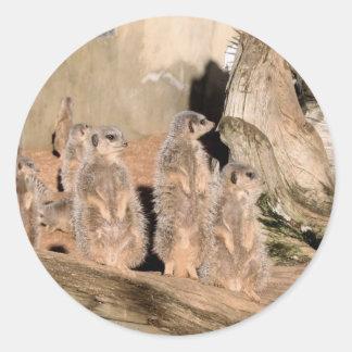 Meerkats Classic Round Sticker
